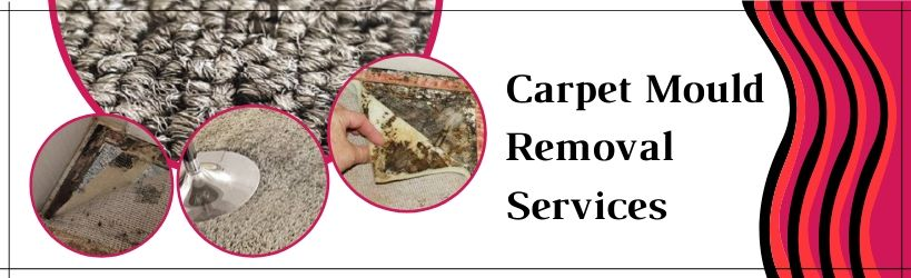 Carpet Mould Removal Services