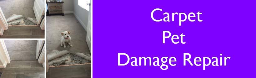 Carpet Pet Damage Repair Service