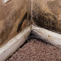 Carpet Mould Removal Brisbane
